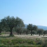 You'll see almond & olive groves all over the region