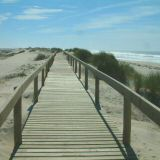 Boardwalks lead you through the sand dunes to protect the wildlife